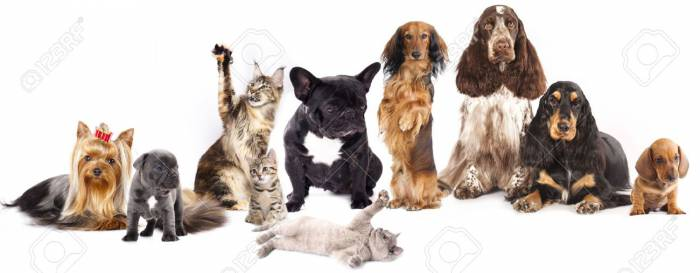 15779763-Group-of-cats-and-dogs-in-front-of-white-background--Stock-Photo